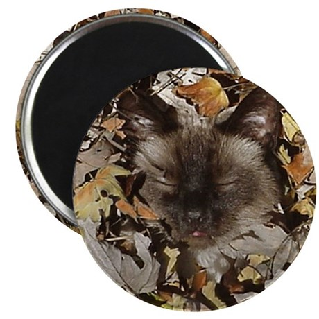 """Siamese Kitty 2.25"""" Magnet (10 pack)"""