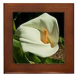 Framed Tile - White Lilly