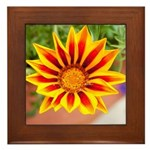 Framed Tile - Orange and Red Daisy