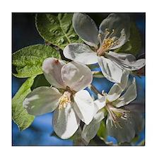 Apple Blosson Coasters Tile Coaster