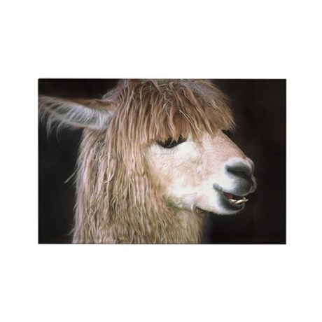 Ringo the Alpaca Rectangle Magnet