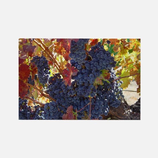 grapes + vineyards photography Rectangle Magnet