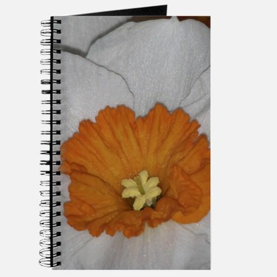 Professor Einstein Daffodil Journal