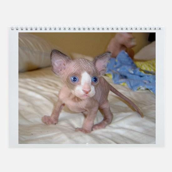 Sphynx Kitten Wall Calendar