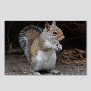 Postcards (Package of 8) cute squirrel