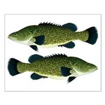 Murray Cod Posters