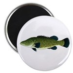 Murray Cod Magnets