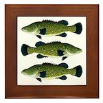 Murray Cod Framed Tile