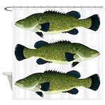 Murray Cod Shower Curtain