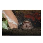 Onyx the Toad Postcards (Package of 8)