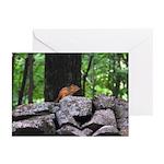 Cute Chipmunk Greeting Cards (Pk of 20)
