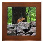 Cute Chipmunk Framed Tile
