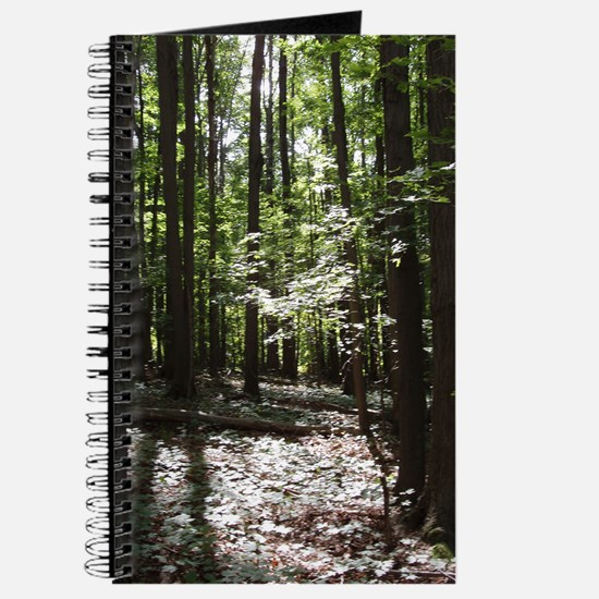 Journal: Forest Light