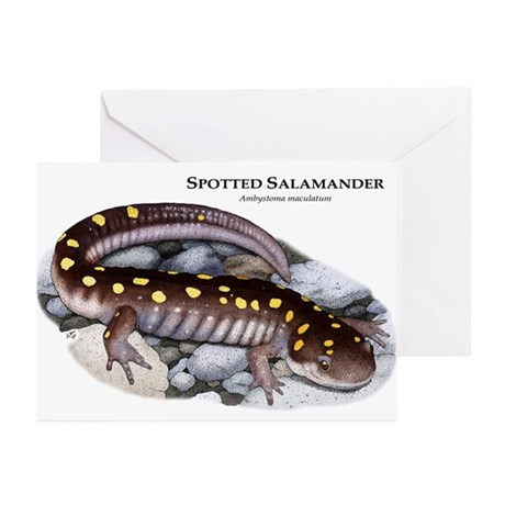 Spotted Salamander Greeting Cards (Pk of 20)