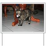 Tortoishell Cat 2 Yard Sign