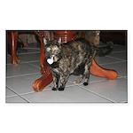 Tortoishell Cat 2 Rectangle Sticker