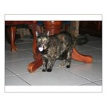 Tortoishell Cat 2 Small Poster