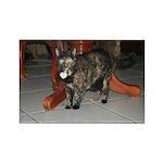 Tortoishell Cat 2 Rectangle Magnet (10 pack)