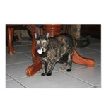 Tortoishell Cat 2 Postcards (Package of 8)
