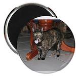 Tortoishell Cat 2 Magnet