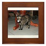 Tortoishell Cat 2 Framed Tile