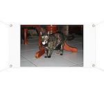 Tortoishell Cat 2 Banner