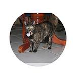 Tortoishell Cat 2 3.5
