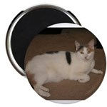 Sleeping Cat Magnet