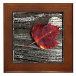 Red Autumn Leaf Framed Tile