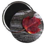 Red Autumn Leaf Magnet
