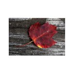 Red Autumn Leaf Rectangle Magnet