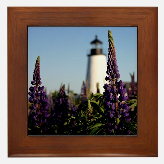 Pemaquid Lupins Framed Tile
