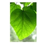 Green Heart Leaf Postcards (Package of 8)