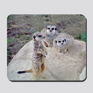 Meerkats 1&2 Mousepad