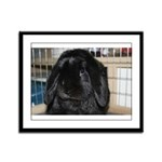 Hug-a-Bunny Framed Panel Print
