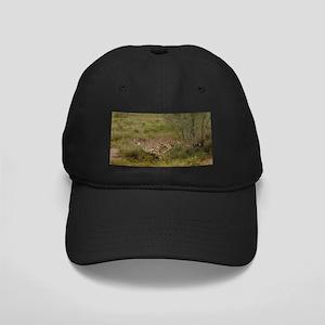Cheetah Black Cap