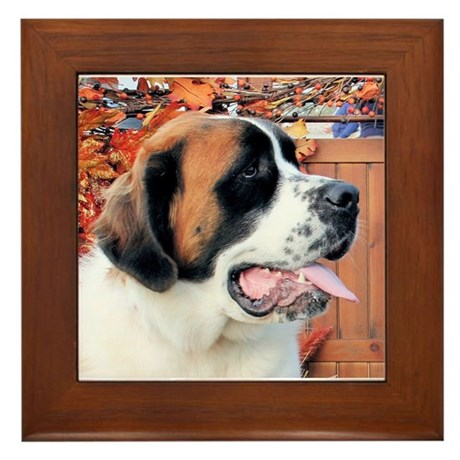 Mae Saint Bernard Photo-6 Framed Tile