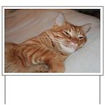 Cat Nap Yard Sign