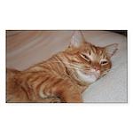 Cat Nap Rectangle Sticker 50 pk)
