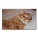 Cat Nap Rectangle Sticker 10 pk)