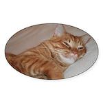 Cat Nap Oval Sticker (10 pk)