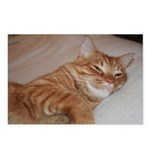 Cat Nap Postcards (Package of 8)