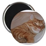 Cat Nap Magnet