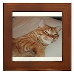 Cat Nap Framed Tile