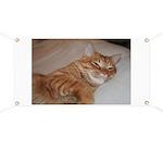 Cat Nap Banner