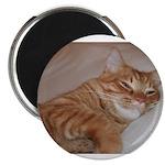 Cat Nap 2.25