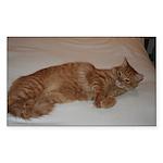 Tabby Rectangle Sticker 50 pk)