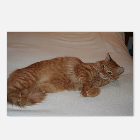 Tabby Postcards (Package of 8)
