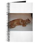 Tabby Journal