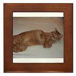 Tabby Framed Tile
